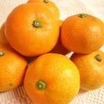 オレンジとみかんの違い 栄養面で優れているのはどっち!?