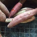 さつまいもの芽にもジャガイモと同じように毒がある!?